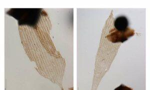 Ученые случайно обнаружили в древних окаменелостях самую старую бабочку