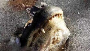 Специалисты: Замороженные аллигаторы - это нормально