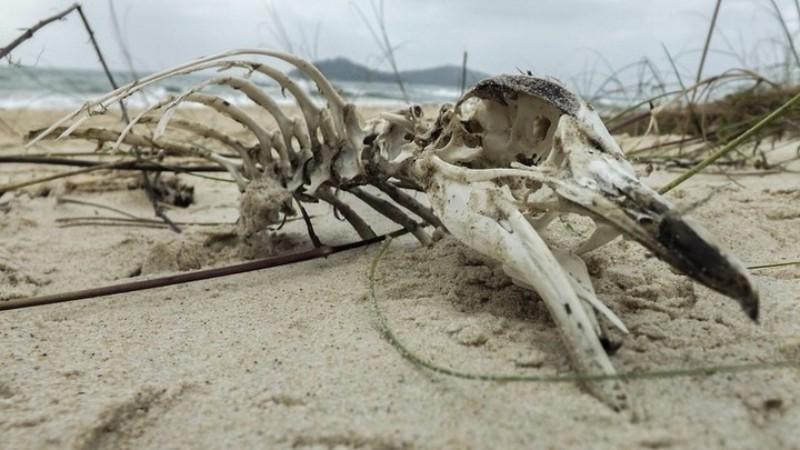 Ученые нашли скелет гигантского пингвина