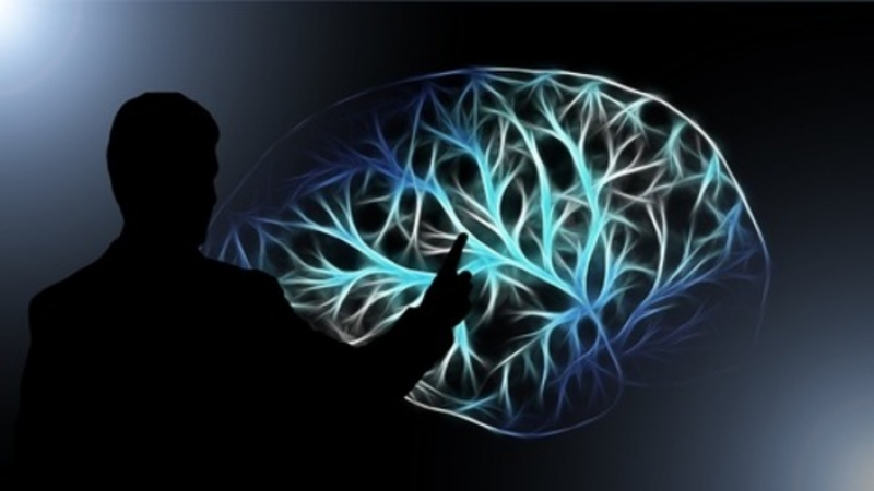 Ученые обнаружили 2-й мозг в человеческом организме