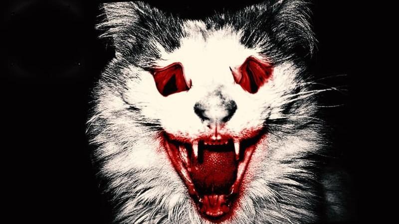Таинственная кошка-мутант преследует американцев