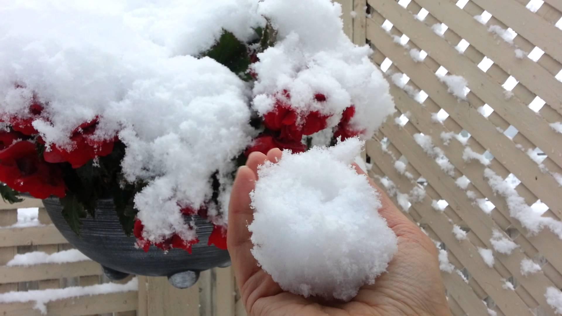 В Канаде выпал снег и не по летнему похолодало