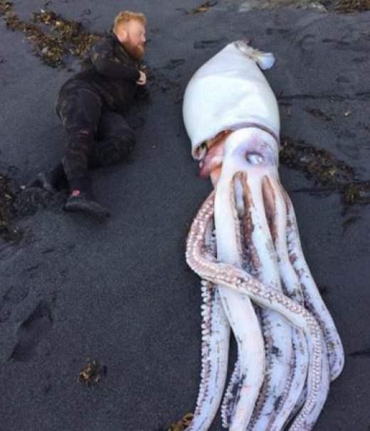 В Новой Зеландии обнаружили огромного кальмара