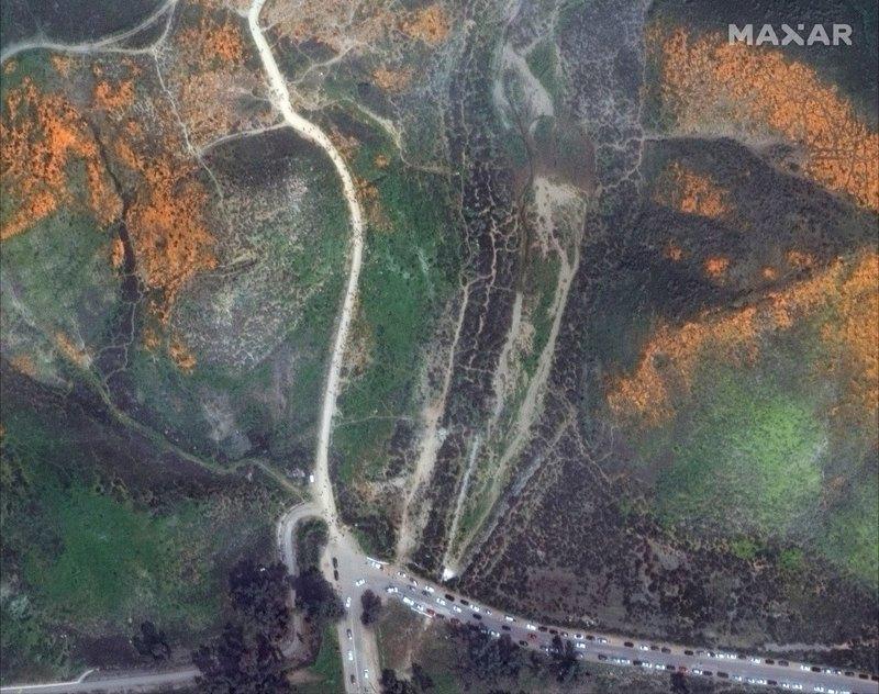 Цветение маков в Калифорнии видно даже с космоса