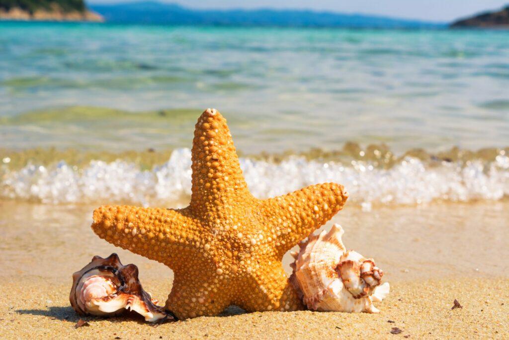 Почему морские ракушки ни в коем случае нельзя хранить дома: знают только единицы