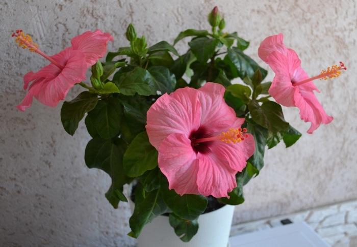 Цветы счастья: что начнет происходить в доме, если поставить в спальню эти растения