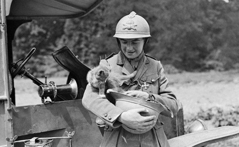 Как коты помогали солдатам во Вторую Мировую: обязательно расскажите эту историю детям