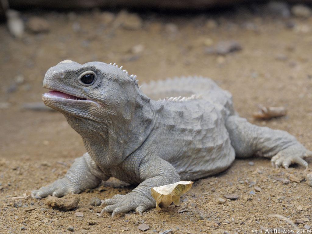 Эти животные ставят ученых в тупик: живут сотни лет, а не должны
