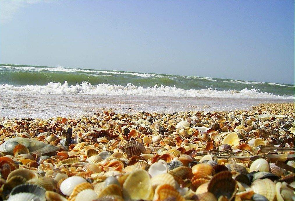 Пустые ракушки на пляже