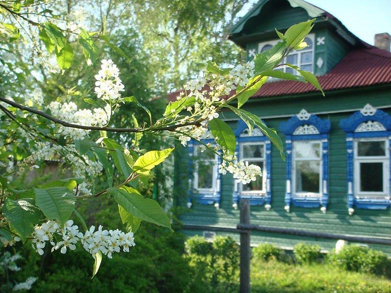 Черемуха растет у дома – жди беду