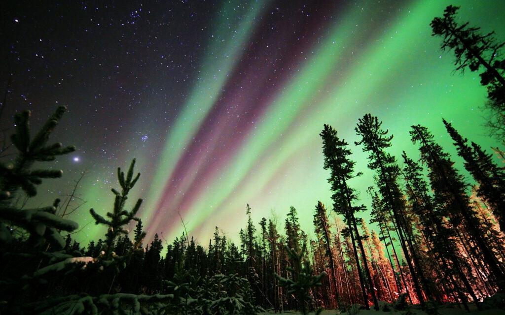 Полярное бешенство: какое необычное явление сводит с ума жителей  Севера
