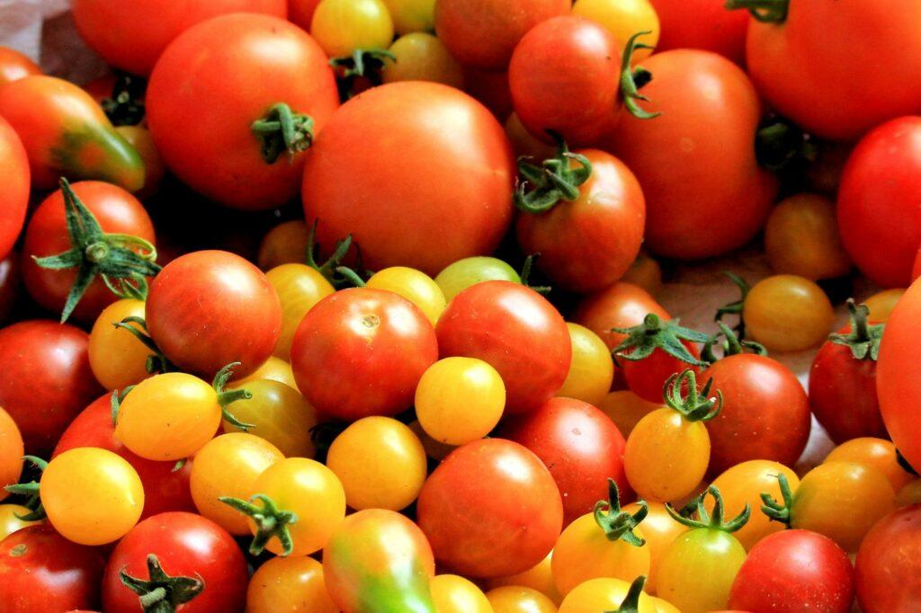 Чем желтые помидоры отличаются от красных: этот нюанс нужно знать
